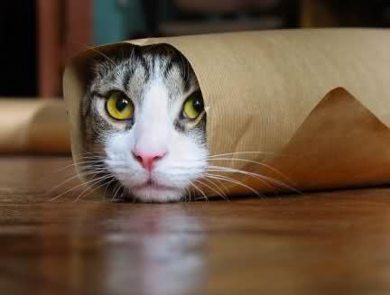 gatto ricco